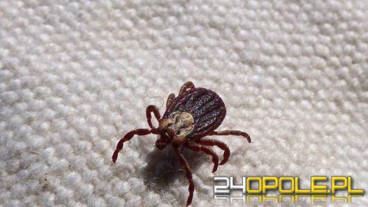 By mały kleszcz nie stał się dużym problemem. Jak się uchronić przed tymi owadami?