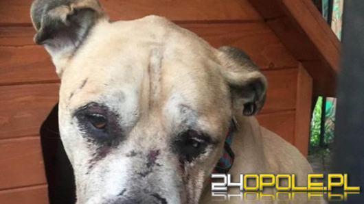 Decyzja o areszcie dla Jarosława G., który znęcał się fizycznie i psychicznie nad psem