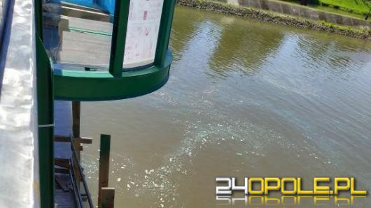 Odra zanieczyszczona farbą podczas prac na moście Sendlerowej