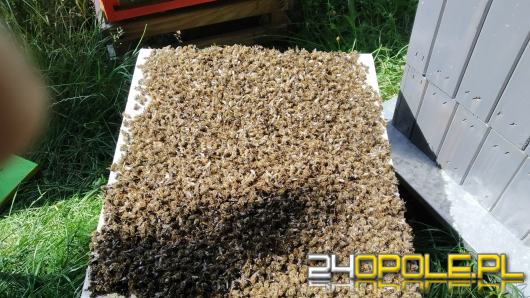 Paweł Kukiz stracił 40 tys. pszczół. To wina oprysków