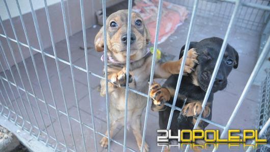 Ogranicz bezdomność zwierząt w swojej okolicy - Przyłącz się do ZWIERZowej Akcji Kastracja!