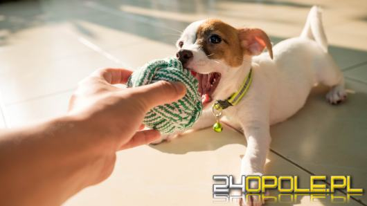 Zabawa z psem - jak bawić się z psem w domu i na zewnątrz