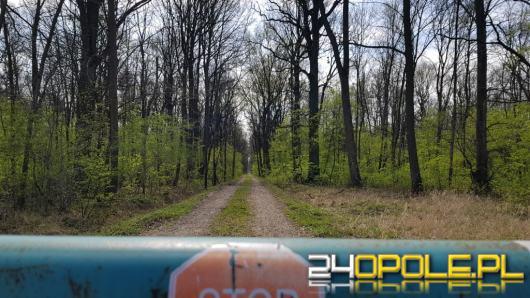 Tragedia w lesie pod Niemodlinem. Zginął mężczyzna prowadzący wycinkę drzew