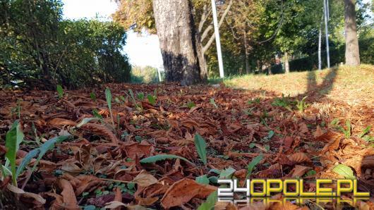 Liście zaczęły opadać z drzew. Miasto przypomina, co możemy z nimi zrobić