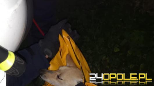 Strażacy interweniowali na amfiteatrze na Górze św. Anny. Uratowano psa