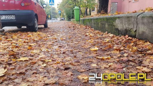 Sprzątanie liści to obowiązek. Za jego niedopełnienie czeka nas kara