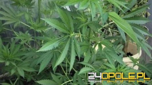 Marihuana wykreślona z listy narkotyków mocno niebezpiecznych. To krok ku legalizacji?