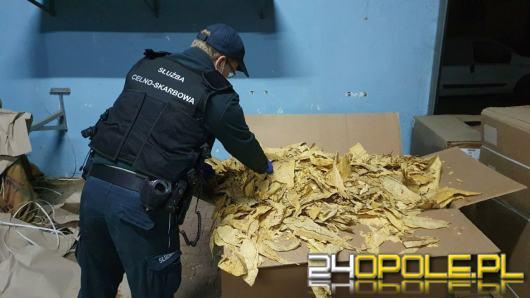 Opolska KAS zabezpieczyła 2,2 tony tytoniu i suszu tytoniowego. Produkcja miała miejsce w Opolu