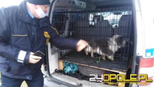 Psy nie umiały wrócić w bezpieczne miejsce. Pomogli strażacy