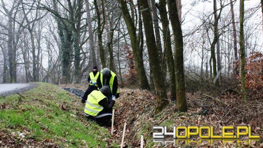 Opolski Zarząd Dróg Wojewódzkich dba o...żaby