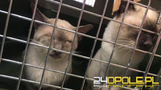 Gospodarz miał w pokoju około 50 kotów, większość potrzebowała pomocy. Interwencja TOZ