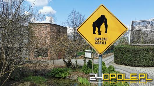 Ogród zoologiczny zaczął już oficjalnie sezon letni. Zmiana godzin otwarcia
