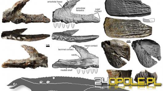 Nowy prehistoryczny gatunek odkryty w województwie opolskim w gminie Dobrodzień