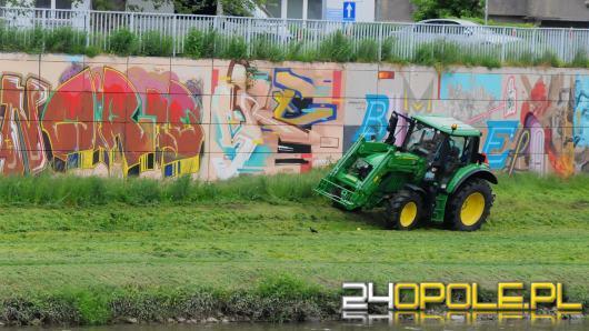 W Opolu rozpoczęto koszenie traw, ale tylko w miejscach strategicznych