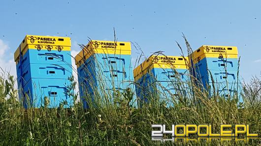 Blisko 200 tys. pszczół-robotnic zamieszkało na terenie galerii handlowej w Opolu