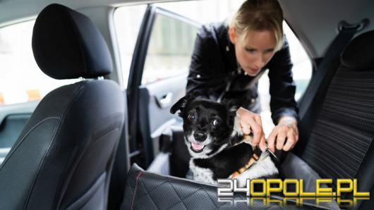 Wakacyjne podróżowanie z psem w samochodzie. Jak bezpiecznie jeździć z pupilem