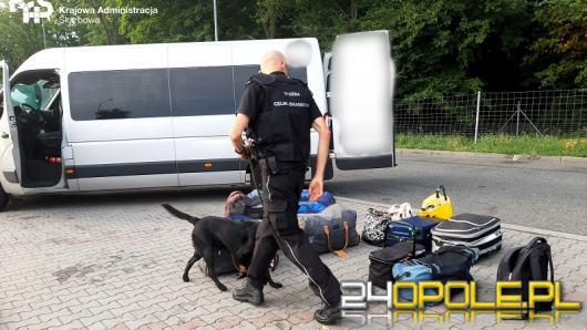 Funkcjonariusze KAS wykrywają próby nielegalnego przywozu narkotyków do kraju.
