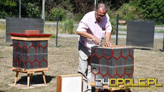 Pszczoły w starych pralkach. Nowy trend w miastach