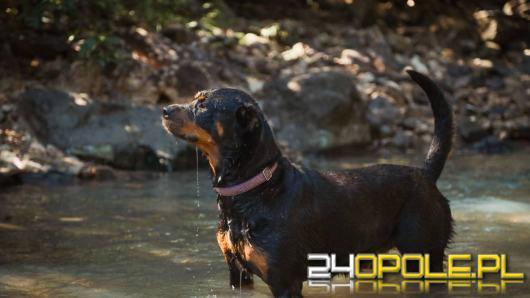 Rottweiler a dzieci: podpowiadamy, czy to dobry pies dla całej rodziny