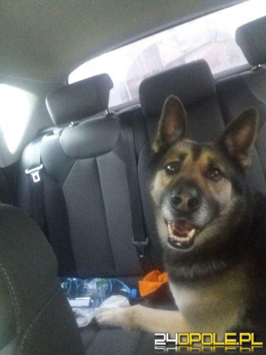 Pies znaleziony 1 stycznia  około 8:30 Opole- Ligota Prószkowska