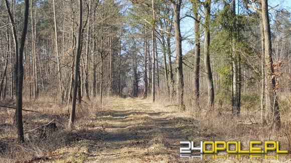 Lasy Państwowe wyznaczą w lasach obszary do spania